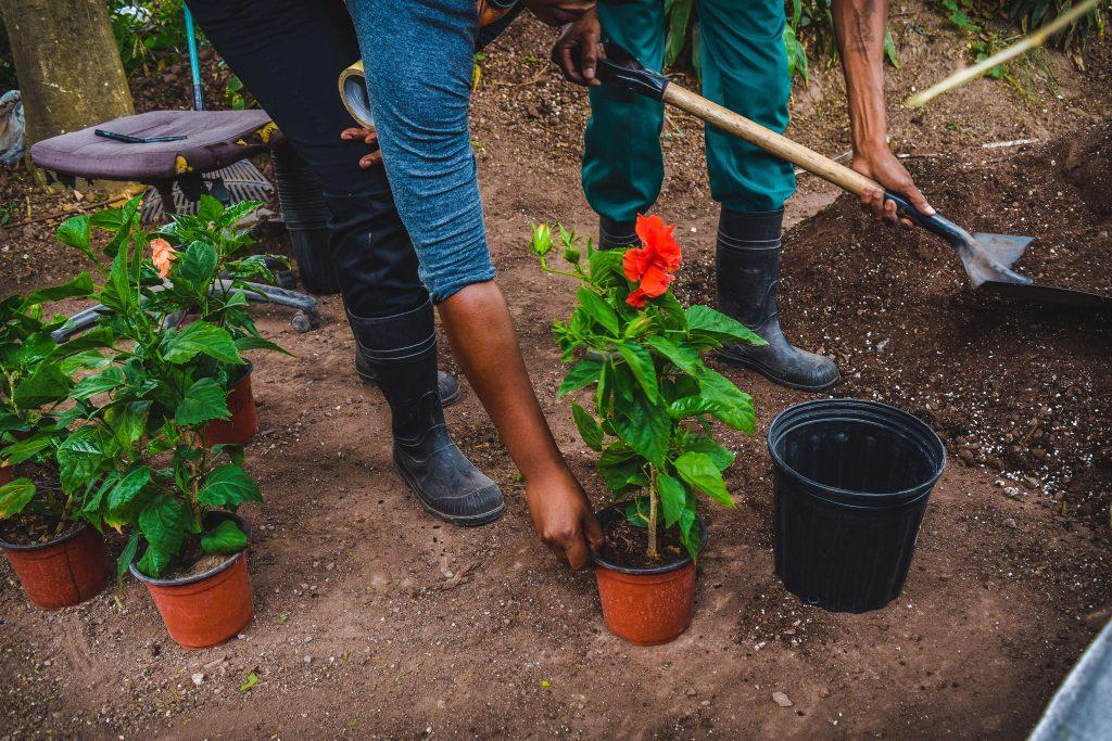 Gardening 101: Nutrients in Fertilizers