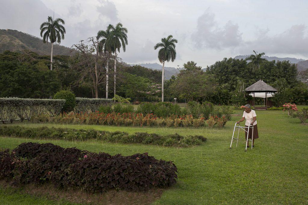 Annual Lawns