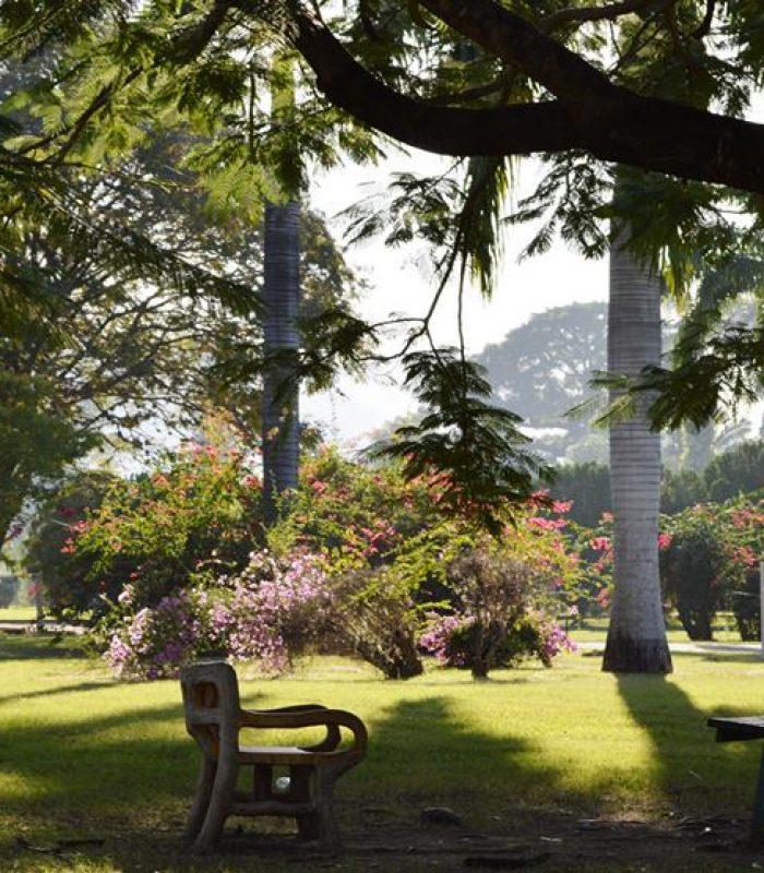 Hope Botanical Gardens Jamaica 65